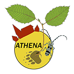 favicon athena