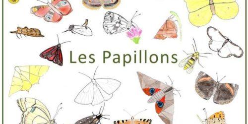 guide pédagogique papillons